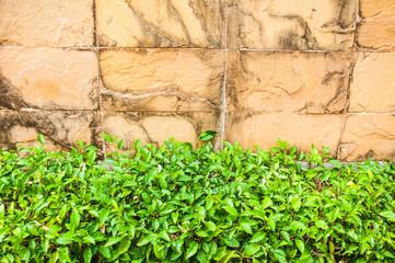 plant and  brick  wall