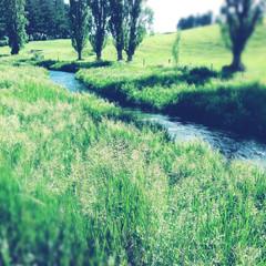 Valley stream