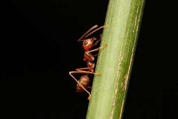 Ants walking on a branch.