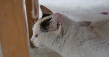 cat at yard 4k