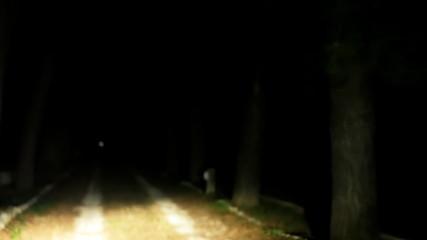 Night driving POV road trees