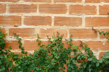 Leaf on brick wall background