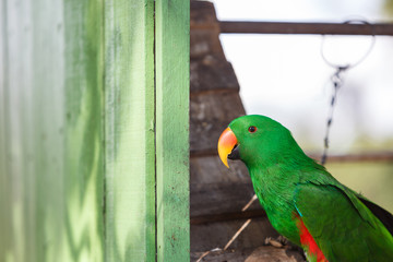 Parrot with chain bild