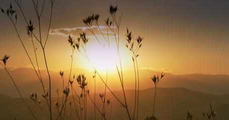 Warm sunset sunset and grass 4k