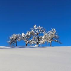 bäume im tiefschnee