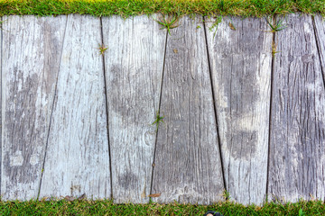 Wooden footpath and grass