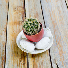 Cactuses in flowerpot with stones,on wooden table