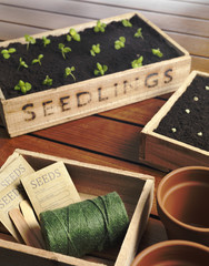 Garden Seedlings in box