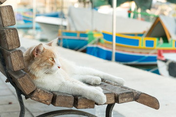 Cat resting by the traditional boats in Marsaxlokk, Malta