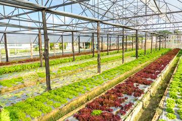Organic hydroponic farm