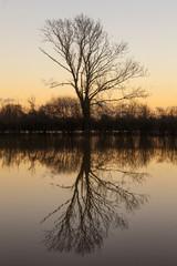 Tree Lake Reflection Sunset or Sunrise