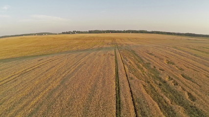 Flight and takeoff above wheat field, aerial panoramic view