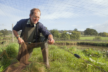 A man handling a large net, pulling it across water.  Netting young carp. A managed carp fishery.