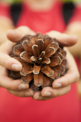 A woman holding a pine cone in her hands.