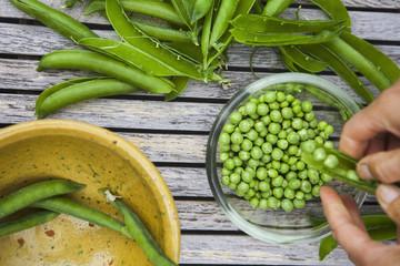 Bowl of freshly picked peas.