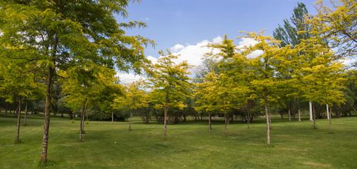 Parque con Arboles en Verano