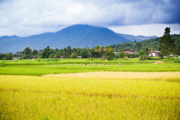 Natural rice field and mountain in Thailand