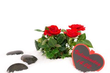 Rosen, Erinnerung an Valentinstag