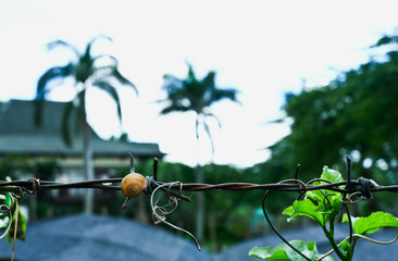 Snail on a wire in tropics with palm trees background