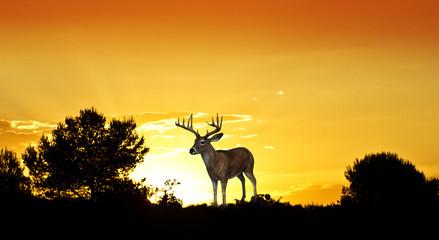 el ciervo entre los pinos