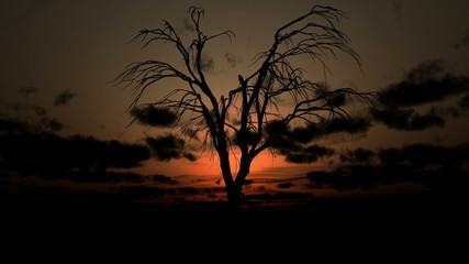 dead tree sunrise 4k