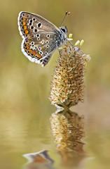 mariposa en la flor del rio