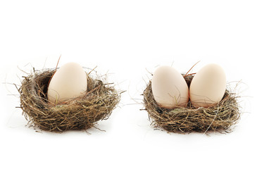 Eggs inside the nests