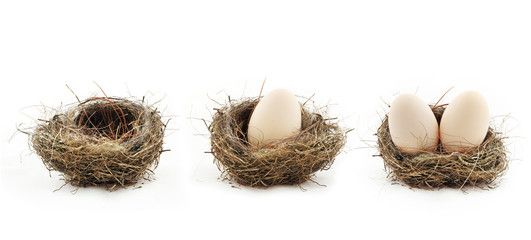 Empty nest and eggs inside the nests