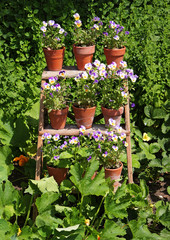 Colorful Flowerpots on a display stand