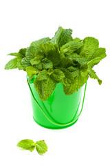 Bunch fresh green mint in mug. Selective focus.