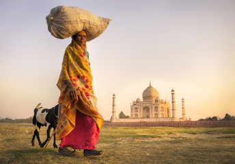 Indian Woman Carrying Head Goats Taj Mahal Concept