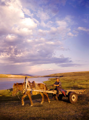 Horse Man Driving Horse Cart Scenic View Nature Concept