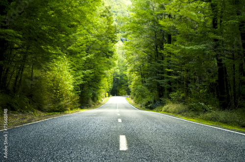Summer Country Road Trees Beside Concept - 75668848