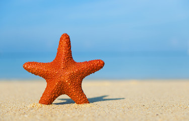 Starfish Tropical Beach Sand Sky Vacation Concept