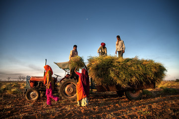 India Family Faeming Harvesting Crop Concept
