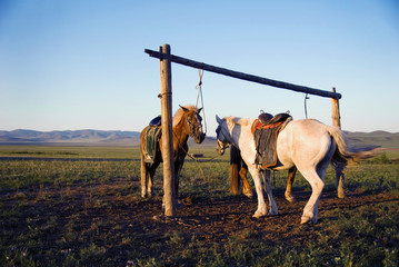 Two Horses Tied On The Post Together In A Open Field With A Beau