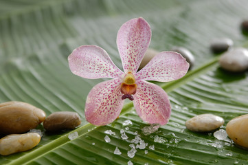 Single orchid and stones wet banana leaf