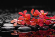 still life with black pebbles and red branch orchid
