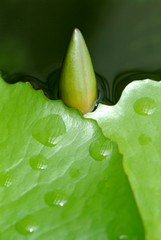 close up water drop on nature