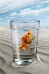 The a fish Swim in the glass