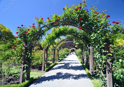Fotobehang Tuin Wellington Rose Garden New Zealand