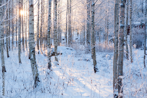 Snowy birch forest and sun light - 75689835