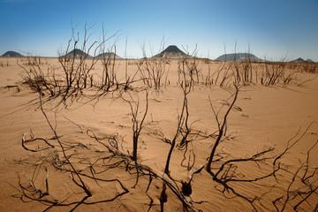 trockene Sträucher in Schwarzer Wüste, Ägypten