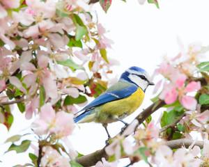 Little bird in beautiful tree
