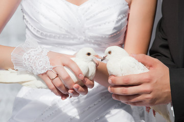 Wedding pigeons in hands of the groom and the bride
