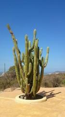 Cactus en Colombia