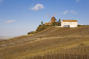 windmill and vineyard near Verzenay, Champagne Region, Burgundy,