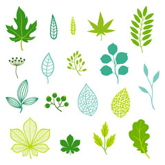 Set of green leaves and elements.
