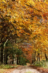 Country Track Through Autumn Woodland