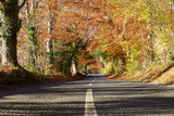 Country Road Through Autumn Woodland - 75698227